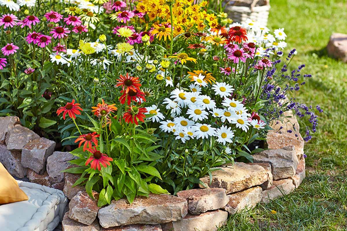 Staudenbeet mit Natursteinkante, bepflanzt mit Echinaceae, Lavendel und Staudenmagerithen