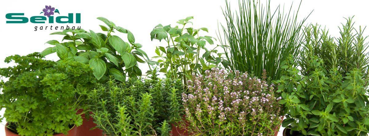 Seidl Gartenbau Stellenanzeige