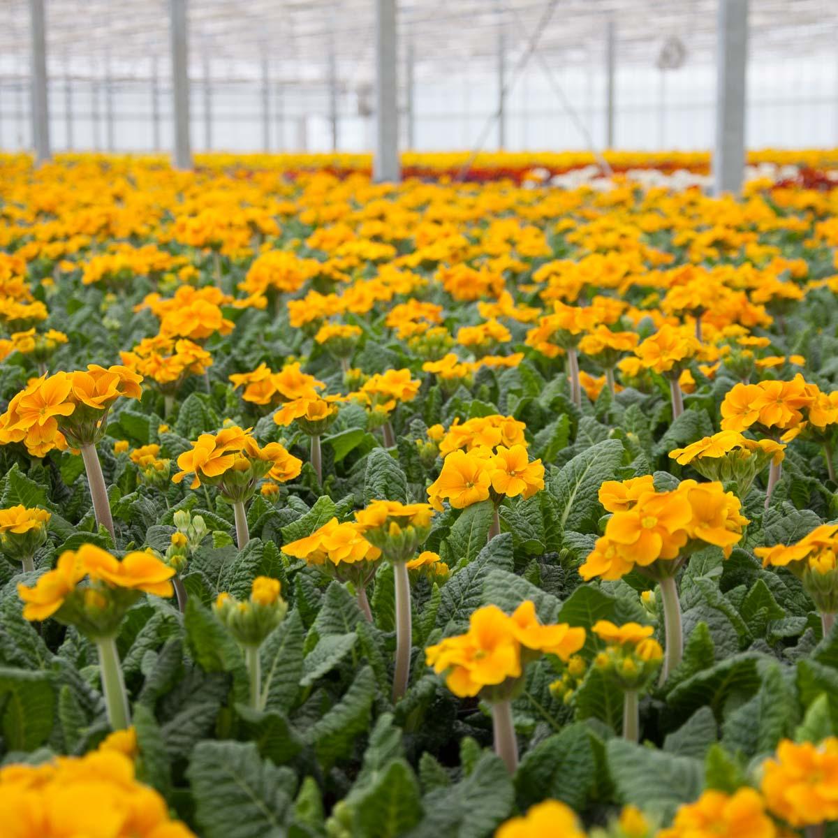 Dechant Gartenbau Betriebsansicht