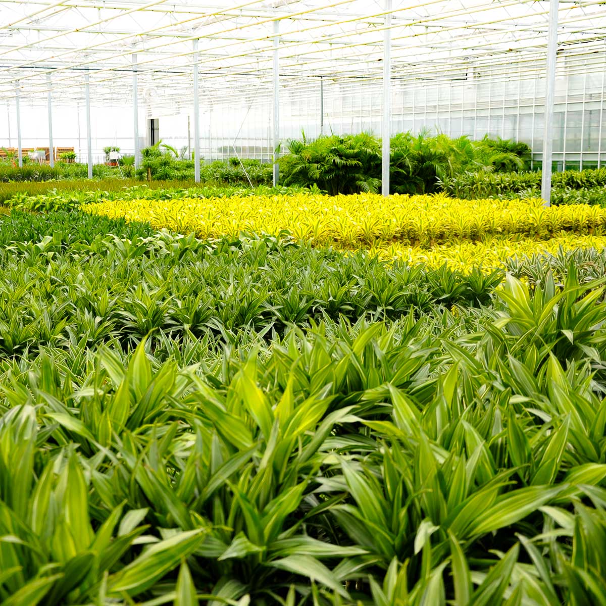 Betriebsansicht K & K Pflanzen GmbH & Co KG