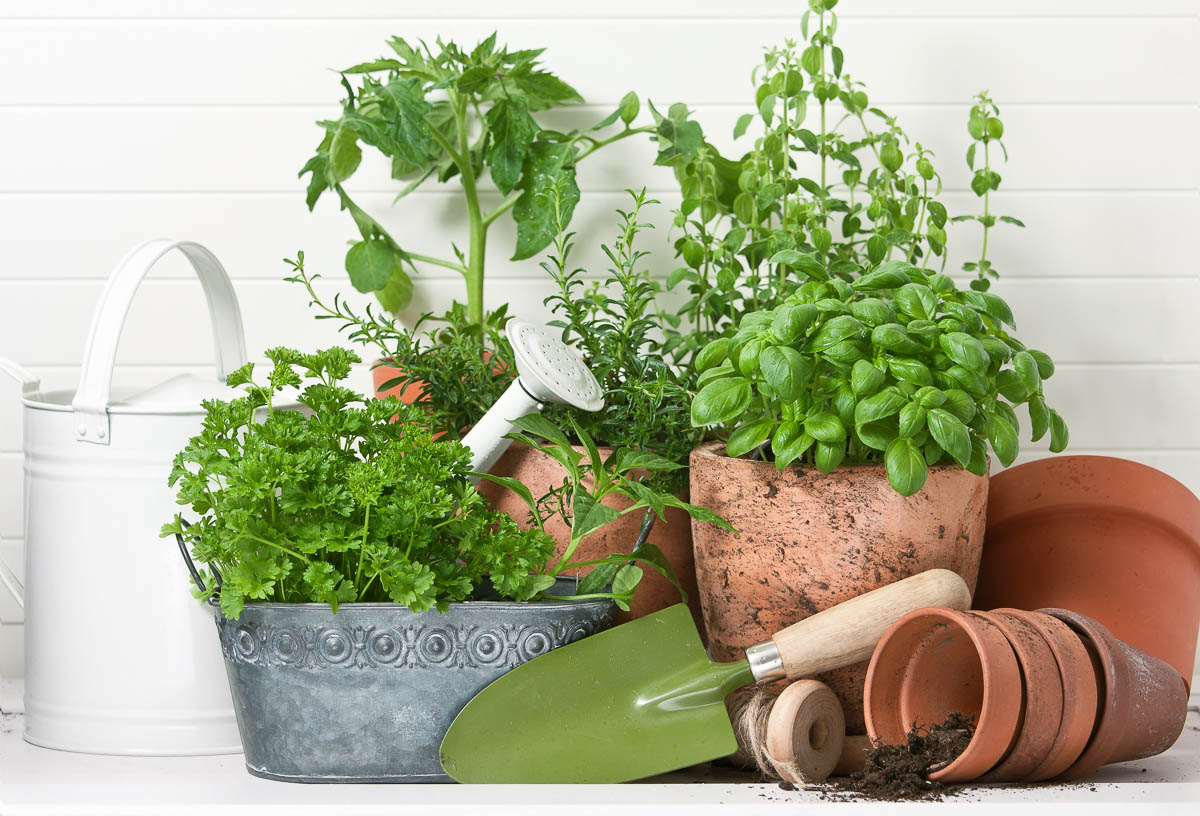Kräuter- und Pflanzentöpfe mit Gießkanne und Gartenwerkzeug