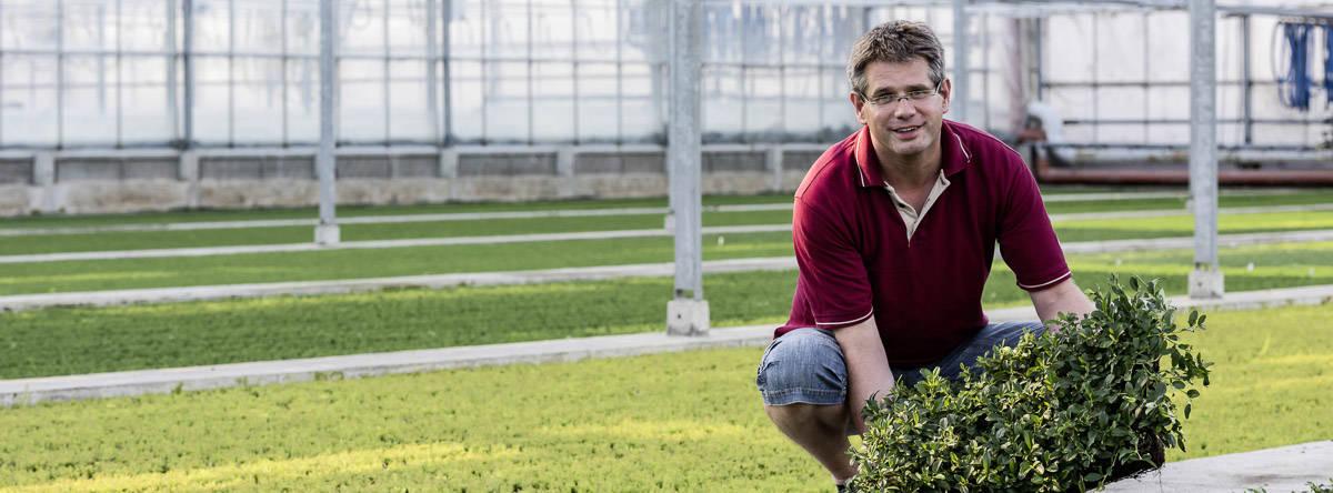 Helix Pflanzen - Moorbeetpflanzen