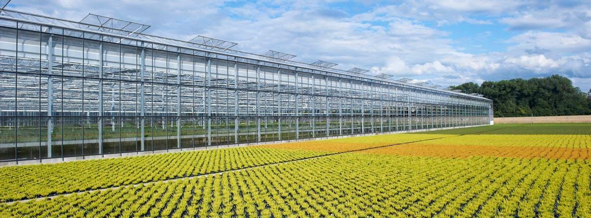 Helix Pflanzen - Müller Gartenbau KG