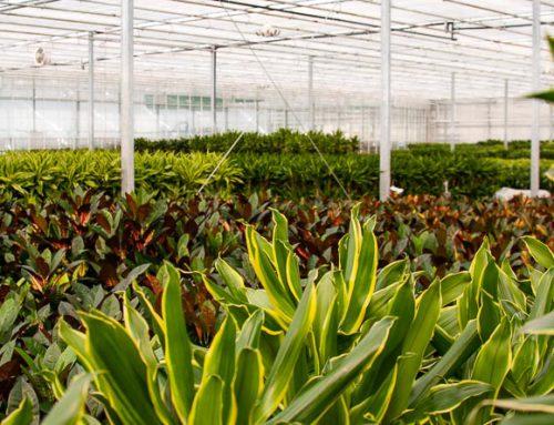 Mitarbeiter Produktion – K & K Pflanzen