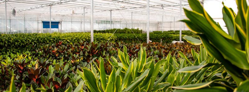 K & K Pflanzen GmbH & Co KG Grünpflanzen Bestand