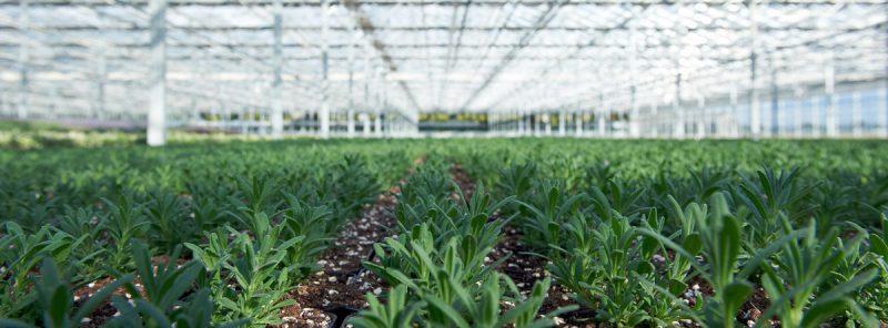 Helix Pflanzen Betriebsansicht