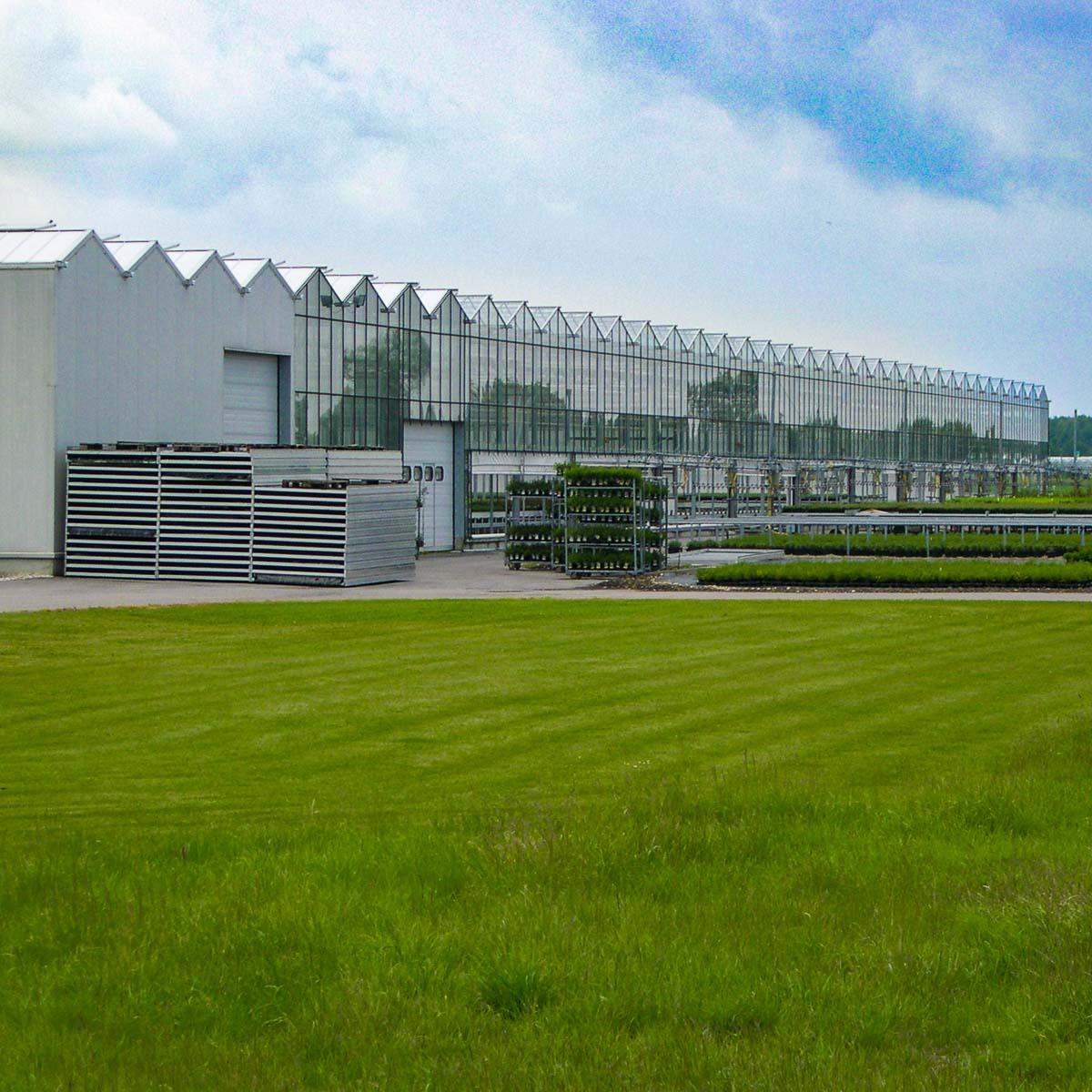 Betriebsansicht Helix Pflanzen GmbH / Müller Gartenbau KG - Freiland
