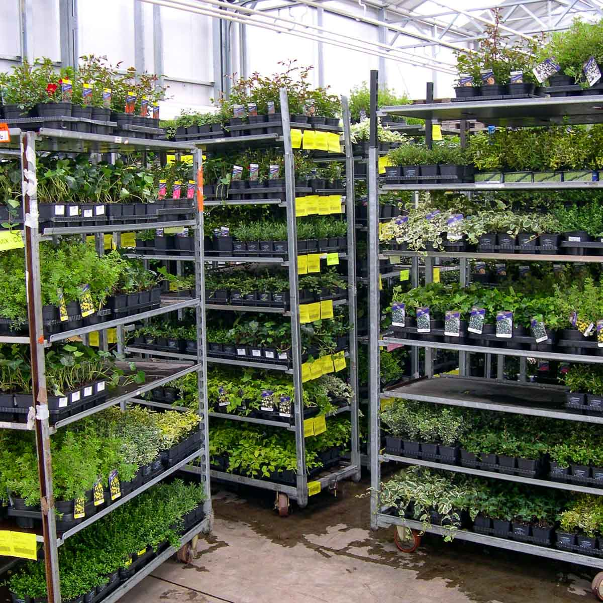 Betriebsansicht Helix Pflanzen GmbH / Müller Gartenbau KG - Kommissionierung
