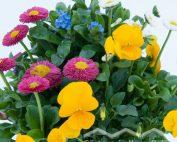 Frühlings-Quattro (Beitragsbild)
