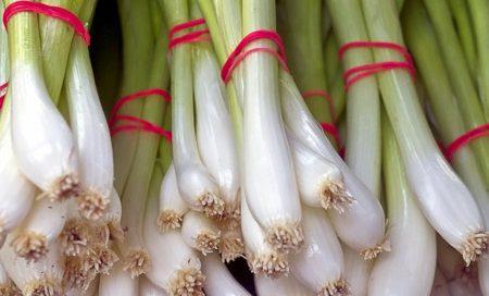 Allium fistulosum Lauchzwiebel Beitragsbild