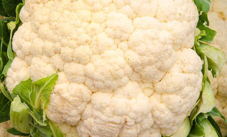 Brassica oleraceae Blumenkohl Beitragsbild