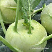 Brassica oleraceae Kohlrabi Beitragsbild