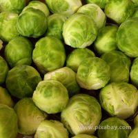 Brassica oleraceae Rosenkohl Beitragsbild