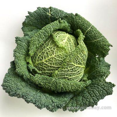 Brassica oleraceae Wirsing Beitragsbild
