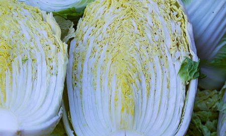 Brassica rapa Chinakohl Beitragsbild