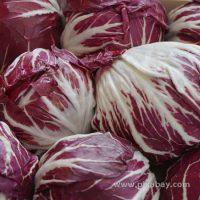 Cichorium intybus Radicchio Beitragsbild