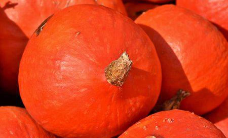 Cucurbita pepo Kürbis Hokkaido Beitragbilder