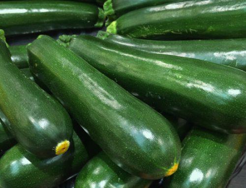 Cucurbita pepo Zucchini