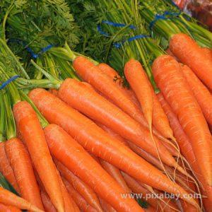 Daucus carota Karotte Beitragsbild