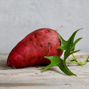 Ipomoea batatas Süßkartoffel Beitragsbild