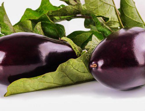 Solanum melongena Auberginen