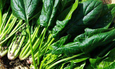 Spinacia oleraceae Spinat Beitragsbild