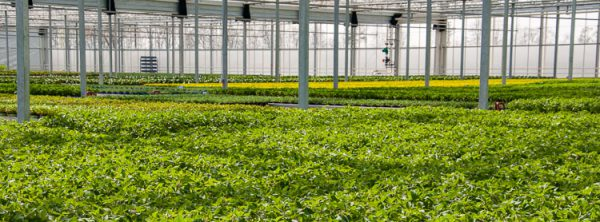 Beitagsbild Betriebsansicht Hartmann Gartenbau GmbH & Co KG
